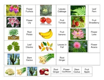 Center of plant Parts and Class Activity