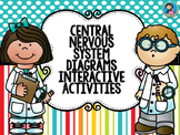 Central Nervous System Diagrams Interactive Activities