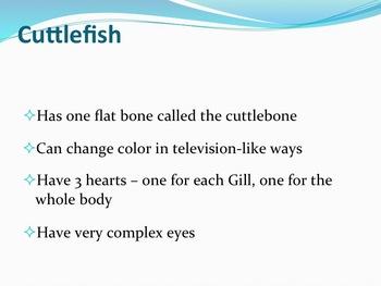Cephalopods - Marine Life Vol. 3 - Slideshow Powerpoint Presentation