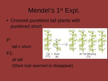 Ch. 11 Genetics Slideshow