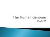 Ch. 14 The Human Genome Slideshow
