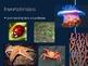 Ch. 25 Intro to Animals Slideshow