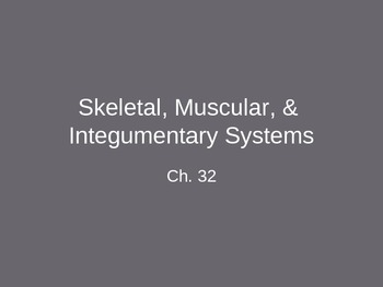 Ch. 32 Skeletal, Muscular, & Integumentary Systems Slideshow