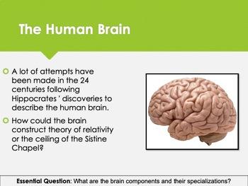 Ch 6.2 Studying the Brain - Body & Behavior Psychology McGraw Hill