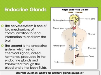 Ch 6.3 The Endocrine System - Body & Behavior Psychology McGraw Hill