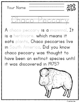Chaco Peccary -- 10 Resources -- Coloring Pages, Reading & Activities