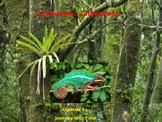Chameleon, Chameleon (Unit 5) Journeys Kindergarten Common Core Reading Series