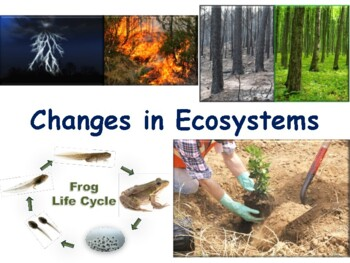 Changes in Ecosystems Flashcards-task cards, study guide,