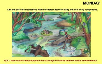 Changes in Ecosystems Review