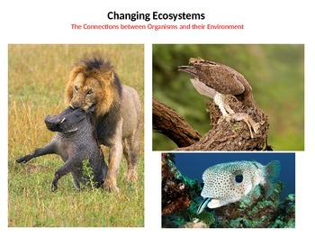 Changing Ecosystems - The Connection between Organisms and their Environment