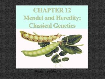 Chapter 12 Mendel & Heredity