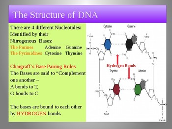 DNA, RNA & Proteins