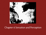 Chapter 6 Sensation and Perception
