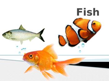 Characteristics about fish
