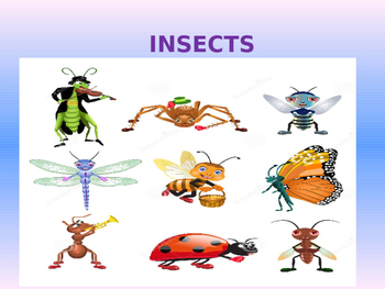 Characteristics about insects