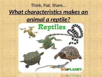 Characteristics about reptiles