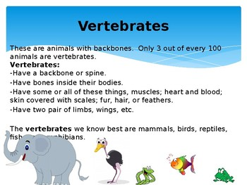 Animal Characteristics: A Guide to Vertebrate and Invertebrate Animals