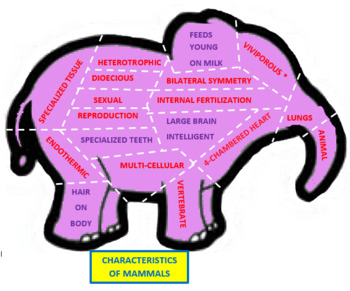 Characteristics of Animals Shape Puzzles