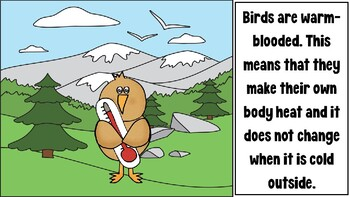 Characteristics of Birds PowerPoint