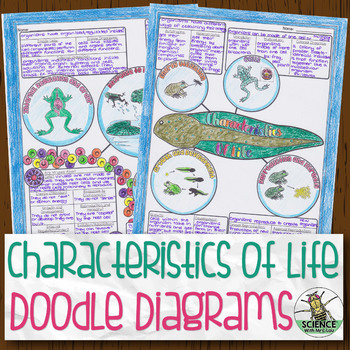Characteristics of Life Biology Doodle Diagram by Science With Mrs Lau