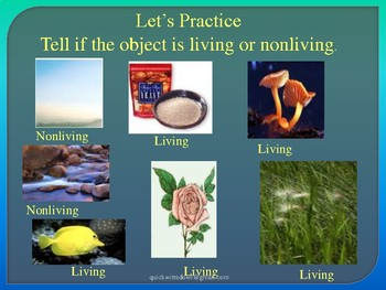 Characteristics of Life Interactive PowerPoint Presentation