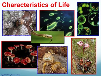 Characteristics of Life Powerpoint for any Life Science Class