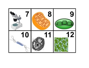 Characteristics of Life and Introduction to Cells Calendar Cards