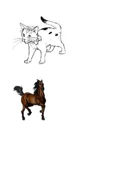 Characteristics of Mammals Lesson Plan