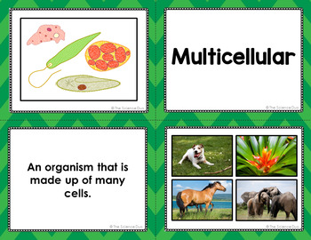 Characteristics of Organisms Vocabulary Sort