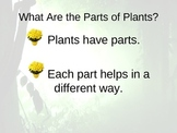 Characteristics of Plants PowerPoint
