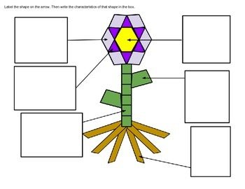 Characteristics of Plants and Plane Figures: An Integrated Unit