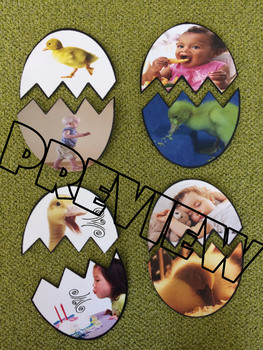 Characteristics of a Duck Duckling & Human - Egg Hatch Puzzle Matching Game