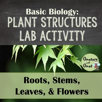 Plant Kingdom Lab: Roots, Stems, and Leaves