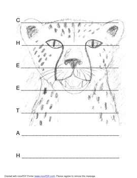 Cheetah Acrostic Poem Template with Original Artwork