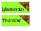 Cheetah Calendar Set