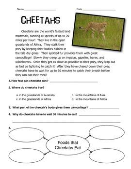 Cheetah Informational Text