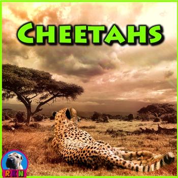 Cheetahs - PowerPoint & Activities