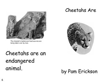 Cheetahs Are- a non-fiction guided reading book