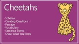 Cheetahs Schema, Questions, Passage, Vocabulary, Sentence Stems