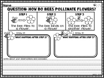 Cheeto Pollination Experiment 224148 on Bug 2 Worksheet