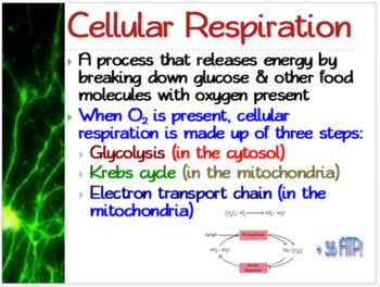 Chemical Pathways: PowerPoint, Student Guided Notes, Worksheet