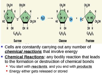 Chemical Reaction and Enzyme Notes