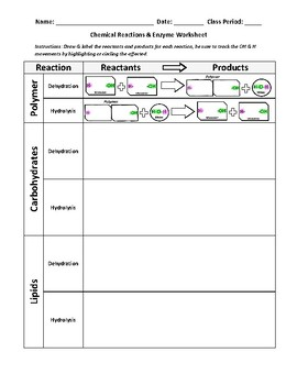 Chemical Reactions and Enzyme Worksheet by ActiveLearning | TpT