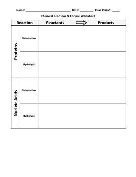 Chemical Reactions and Enzyme Worksheet