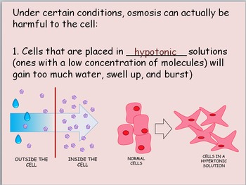 Chemicals in the Cell Powerpoint Presentation and Guided Notes