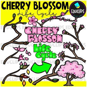 Cherry Blossom Life Cycle Clip Art Bundle {Educlips Clipart}