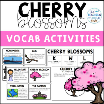 Cherry Blossoms - A Closer Look!
