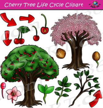 Cherry Tree Life Cycle Clipart