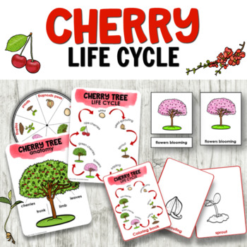 Life Cycle Of A Plant Coloring Pages Worksheets Teaching Resources Tpt