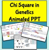 Chi Square in Genetics Animated PowerPoint for AP Biology Unit 5